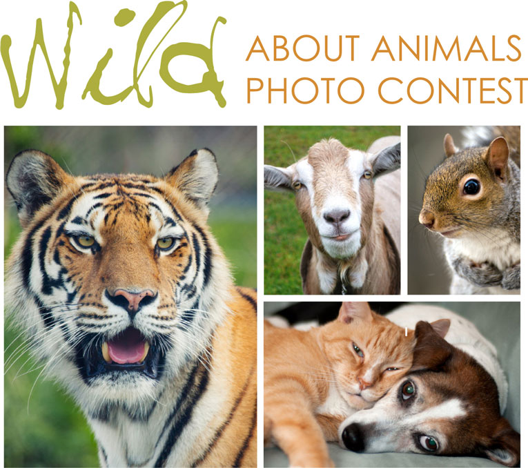 Wild About Animals Photo Contest